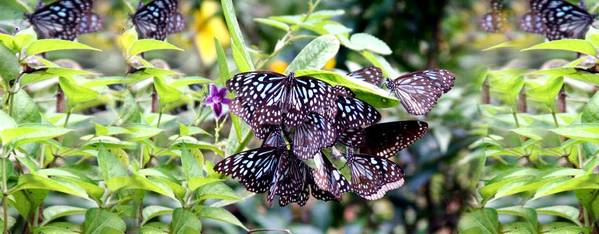 The butterfly park of Thumboormuzhi