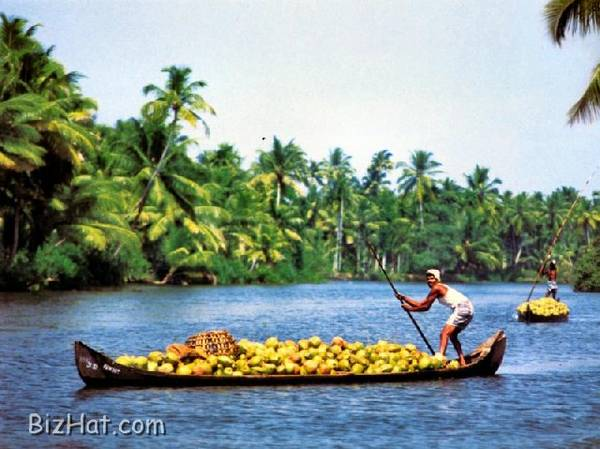 Transporting_Coconuts