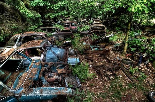 Graveyard of rusty cars
