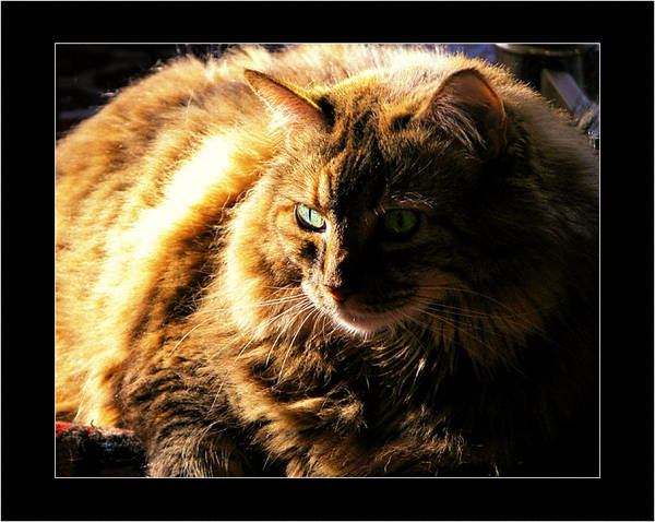 37019707_tyger_color