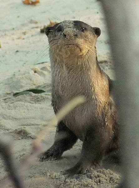 smooth_otter_filtered