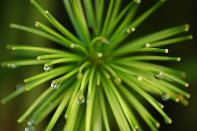 water_droplets1