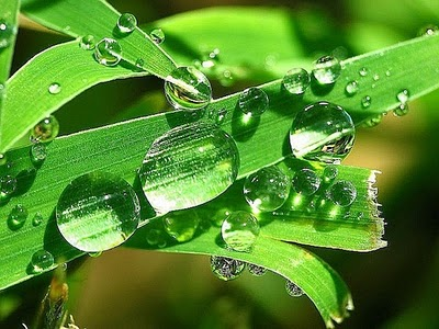 water_drops_leaves