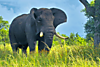 animal-photography-elephant-wild-life.png