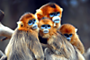 animal-photography-monkey.png