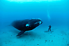 animal-wildlife-photography-big-whale.png