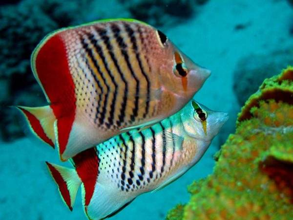 colourful_fishes