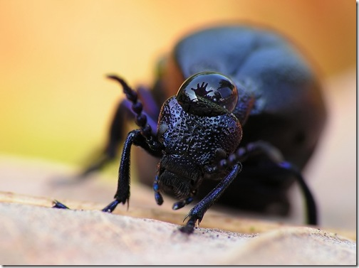 Incredible_Insects_3