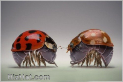 incredible-insects11