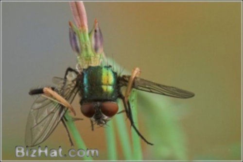 incredible-insects16