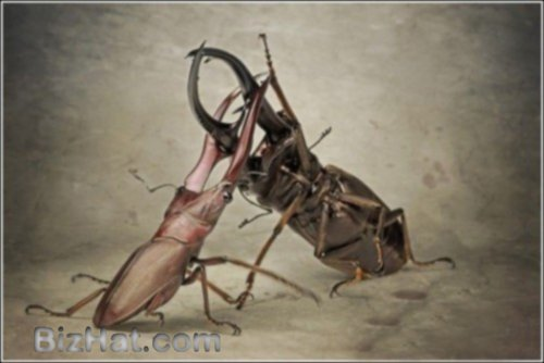 incredible-insects5