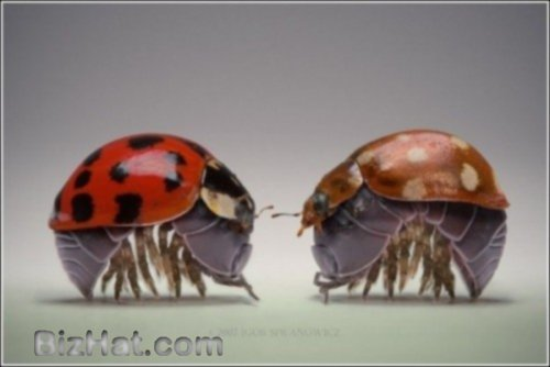 incredible_insects11