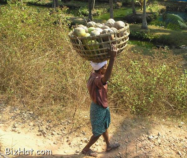 Transporting coconuts