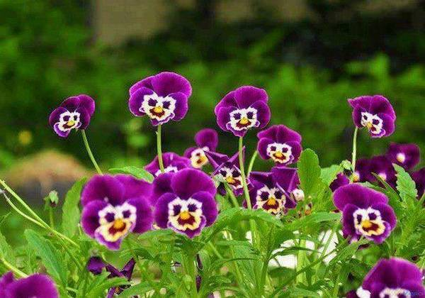 funny_flowers