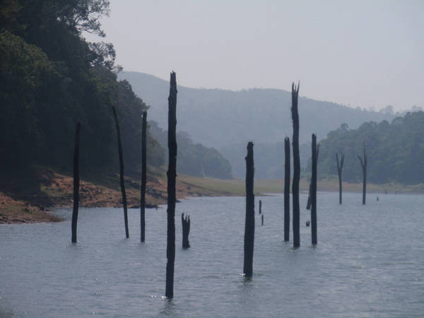 Thekkady tree trunks