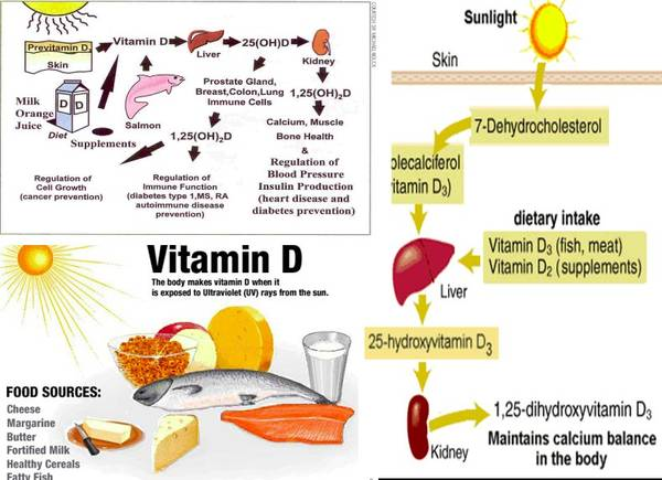 Vitamin rich foods