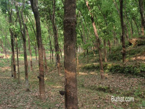Rubber plantation, Onnukal