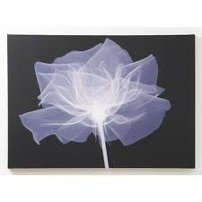 X-Ray_Flowers