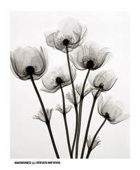 X-Ray_Flowers3